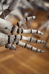 Préhistoire dinosaure museum squelette histoire