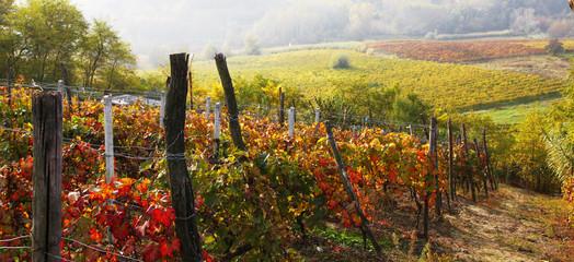 vigne nelle langhe