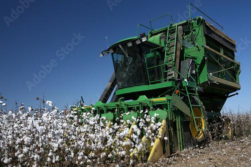 Leinwanddruck Bild cotton fields