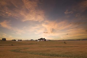 Iowa Corn Field.