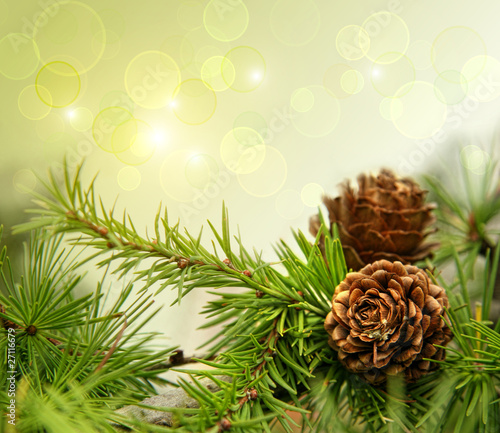 Pine cones on branches with of copy-space