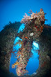 Stern and propellor of the Dunraven shipwreck, artificial reef.