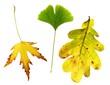 Blättermix