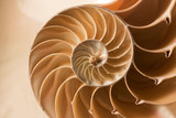 close up nautilus shell pattern