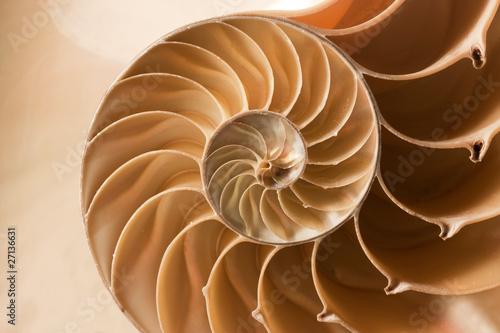 close up nautilus shell pattern - 27136631