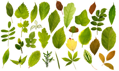 Big collection of different leafs