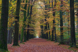 autumn colored forrest