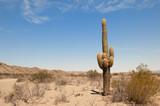 cactus in a desert landscape.