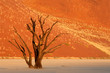 Dead tree against a red sand dune, Sossusvlei, Namibia