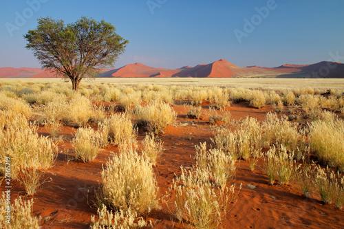 Krajobraz pustyni, Namibia