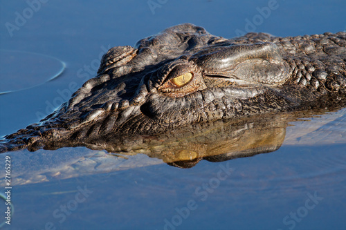Fotobehang Krokodil Saltwater crocodile, Kakadu N/P, Australia