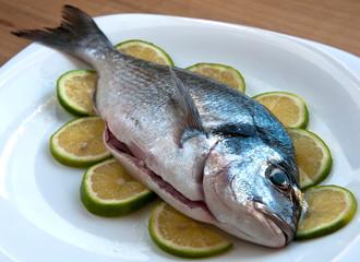 Fresh gilthead fish
