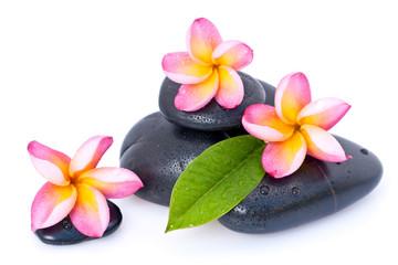 Fleurs de frangipanier sur galets zen