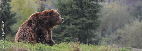 Fotobehang Dragen Braunbär