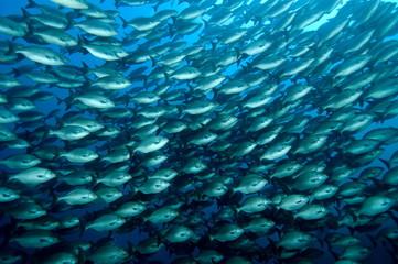 banc de poissons 01