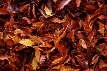 Autumn leaves pattern the forest floor