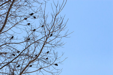 Birds in a Bare Tree