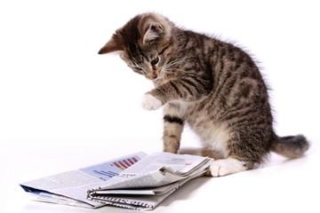 kleine Katze zeigt mit Pfote die Zeitung