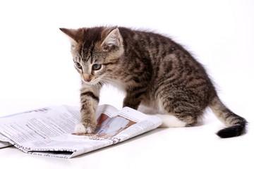 kleine Katze liest Zeitung