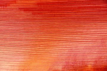 écorce rouge interne de palmier
