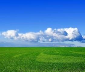 green wheat field under a clouds