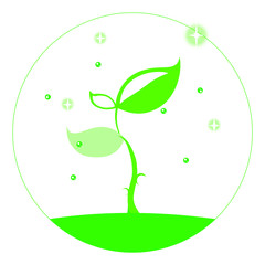 キラキラ植物