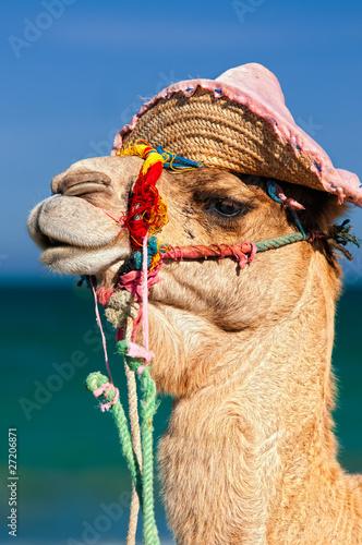 Fototapeten,afrika,reisen,tourism,urlaub