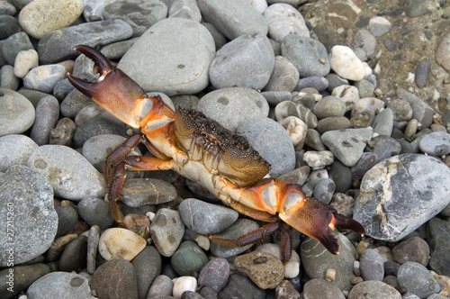 Crab on the pebbles