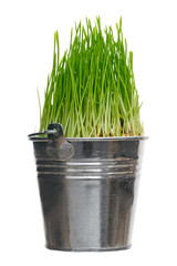 Grass in bucket
