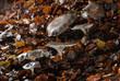 champignons des bois 1