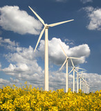 Fototapety Windpark mit Rapsfeld