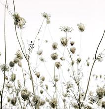 Letnia łąka sylwetki sztuki tła