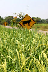 Rice Field and Traffic Sign