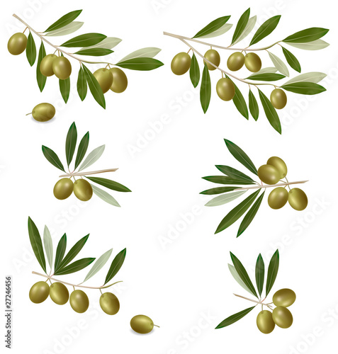 Vector: Green olive branch. Photo-realistic vector.