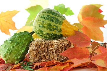 gourds with straw and autumn leaves
