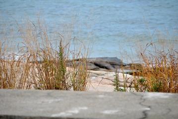 Close-Up at the Beach