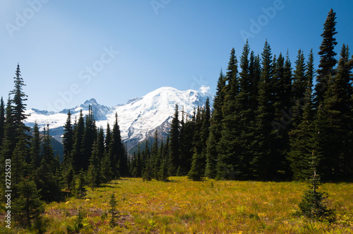 Meadow at Sunrise in Mt. Rainier National Park