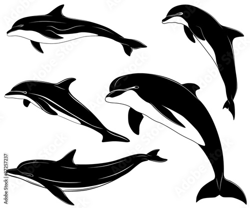 set of various dolphins, tattoo
