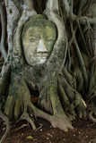 remain of stone budda head in the tree roots