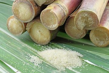 cannes à sucre et sucre raffiné