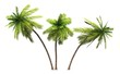 Leinwanddruck Bild - 3x 3D Kokosnusspalmen freigestellt