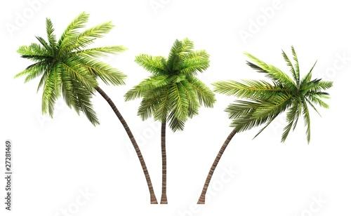 Leinwanddruck Bild 3x 3D Kokosnusspalmen freigestellt