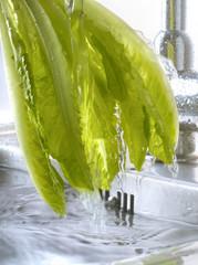Rincer la salade dans l'évier