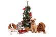 Kleine Katze und drei Hunde unter Weihnachtsbaum