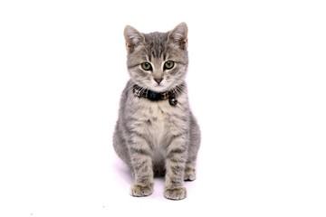 Kleine Katze mit Halsband sitzend