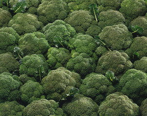 Tapis de brocolis