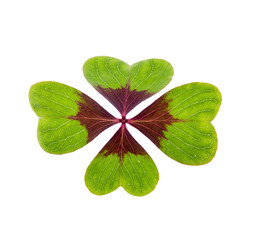 a green lucky clover isolated on white background