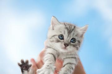 süßes Katzenbaby