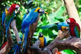 Fototapety group parrots