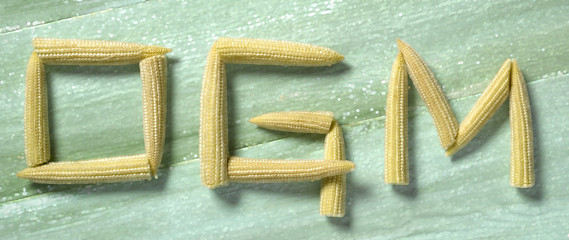 "The words""OGM"" written with small corn on the cobs"